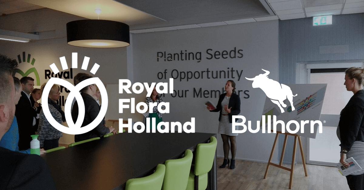 Royal Flora Holland Bullhorn